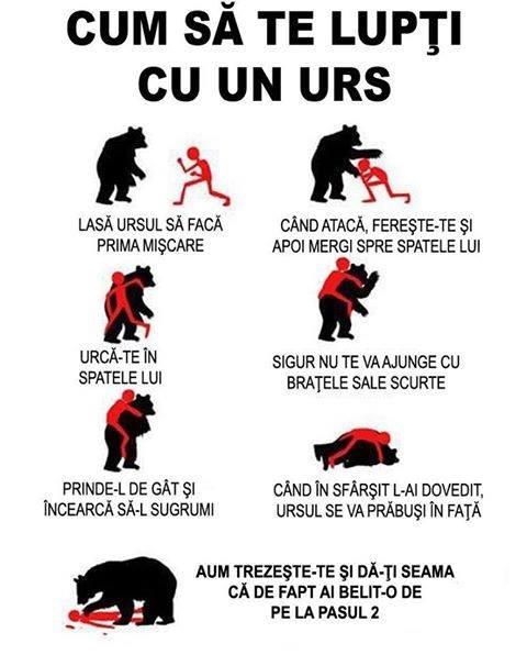 cum sa lupti cu un urs