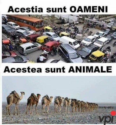 Oameni vs Animale