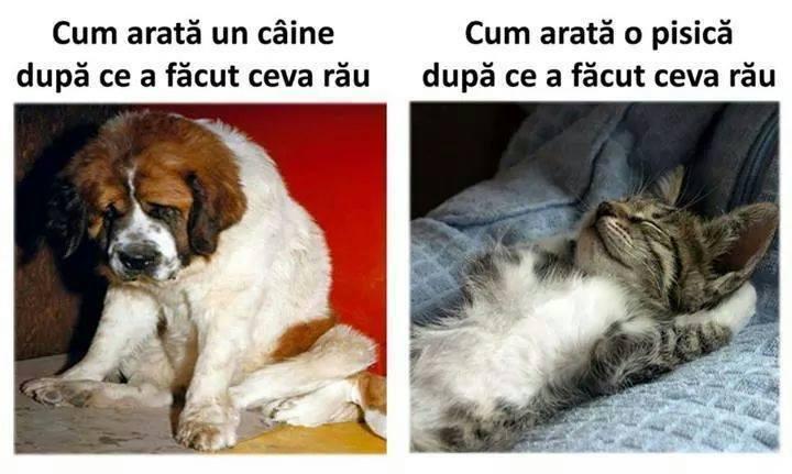 Diferenta dintre caine si pisica
