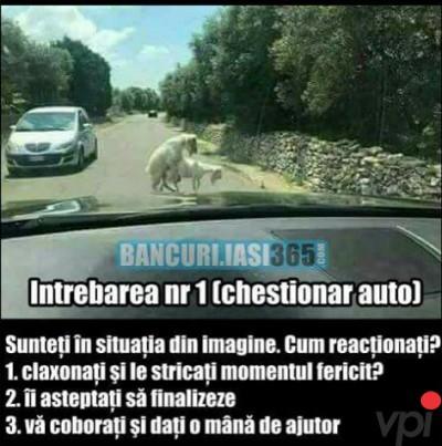 Chestionar auto