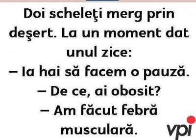 Febra musculara