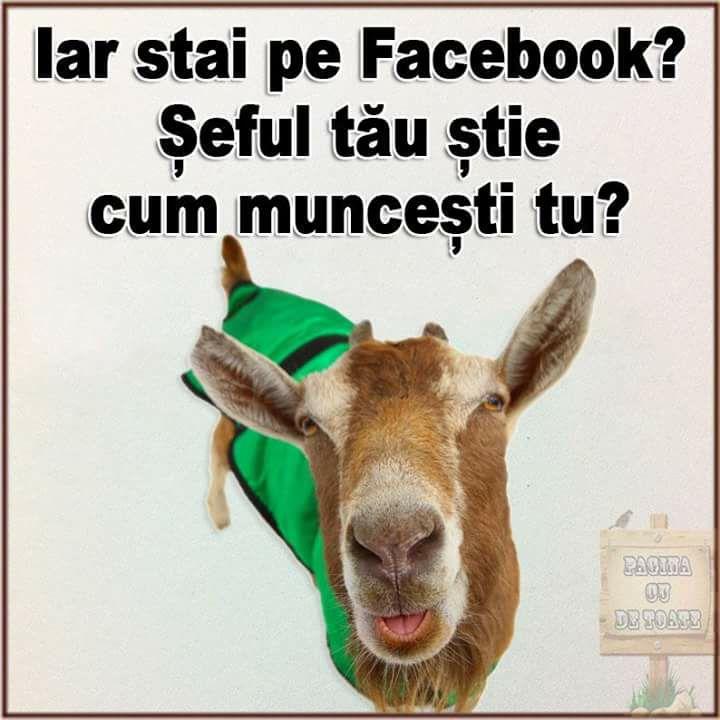 Cand stai pe Facebook la serviciu