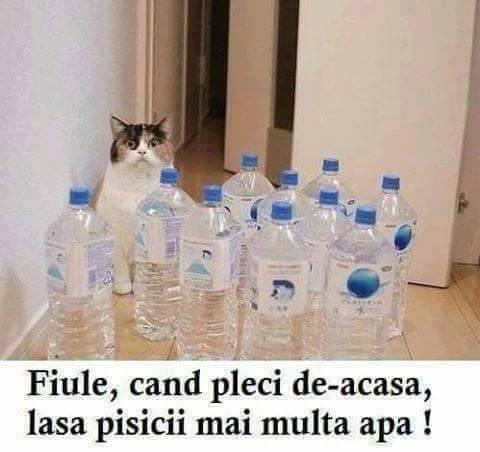 Cum sa ai grija de pisica