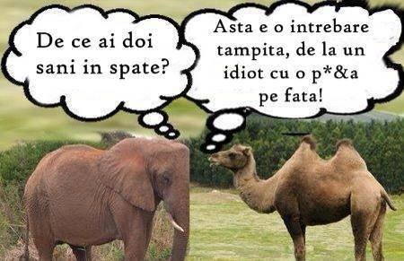 Intrebare stupida