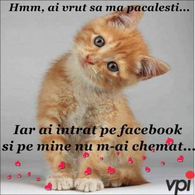 Ai intrat pe Facebook?