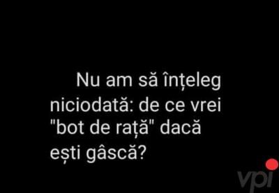 Bot de rata
