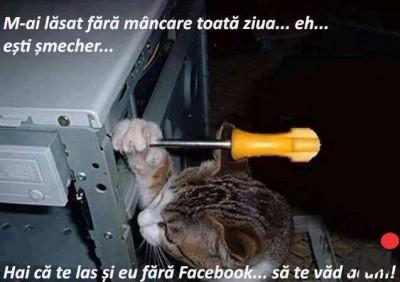 Cand ramai fara Facebook