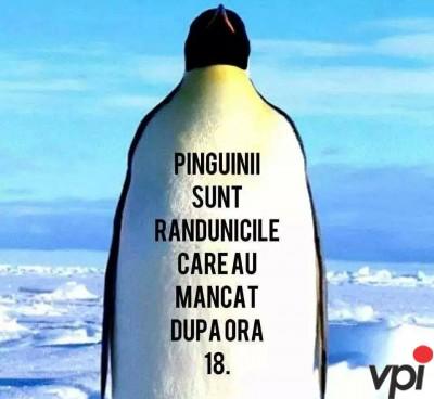 Ce sunt pinguinii