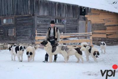 Ciobanesti de Bucovina