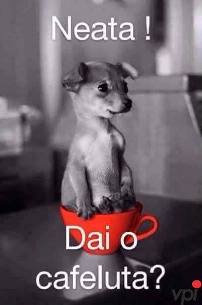 Dai o cafeluta?