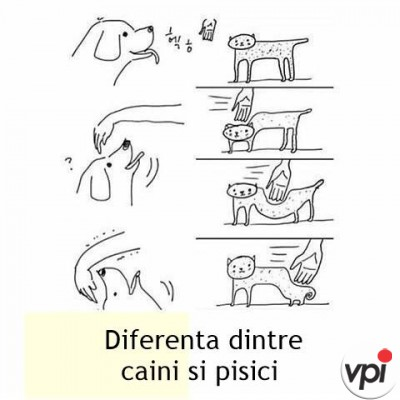 Diferenta dintre caini si pisici