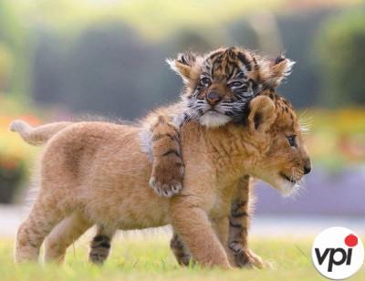 Suntem diferiti, dar ne iubim!
