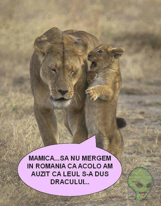 Leul in Romania