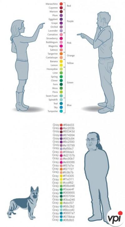 Cum vad culorile barbatii si femeile