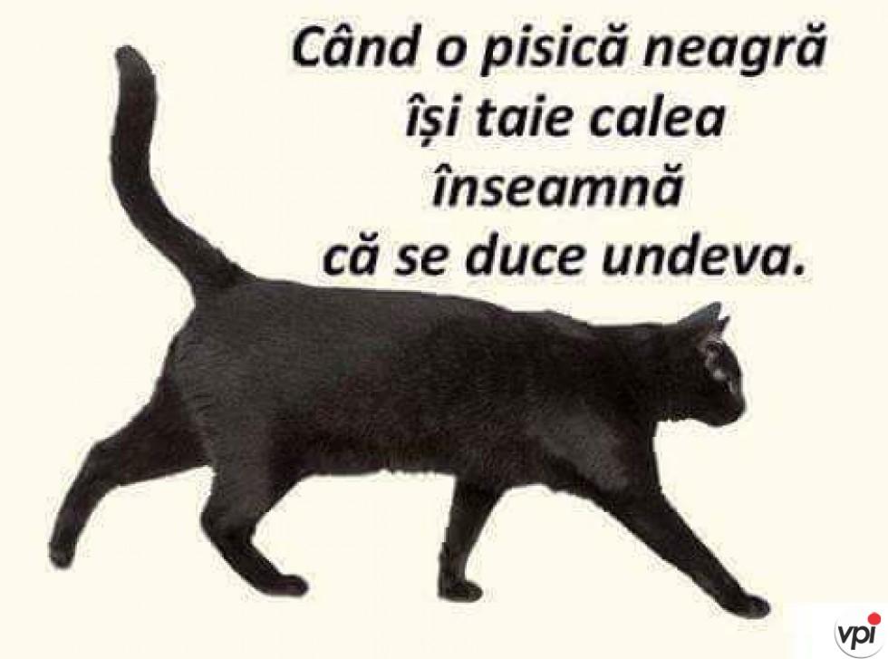 Când o pisică neagră îți taie calea
