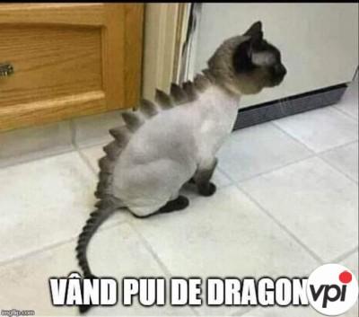 Pui de dragon