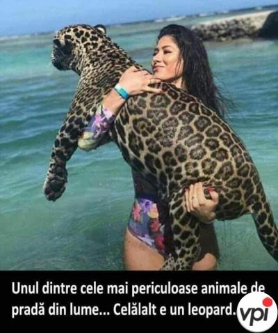 Cel mai periculos animal