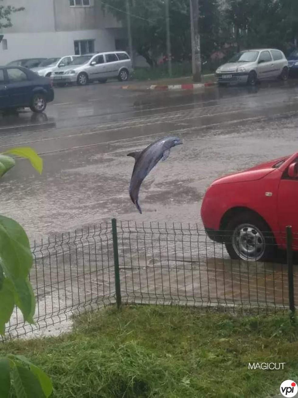 Când plouă la noi