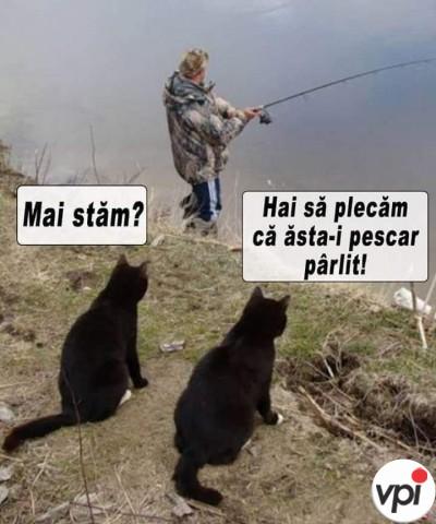 Pescar pîrlit