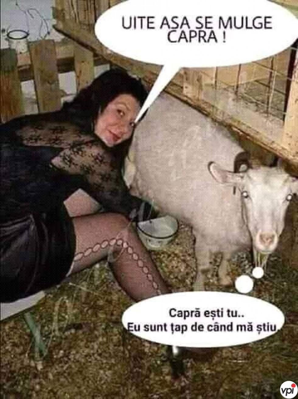 Cum se mulge capra