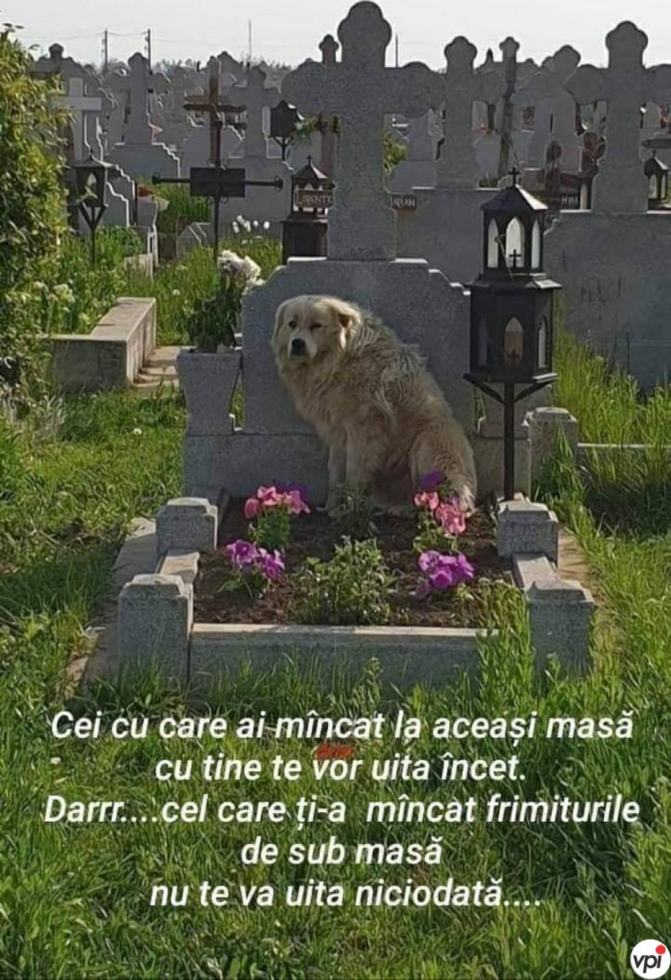 Cine nu te va uita