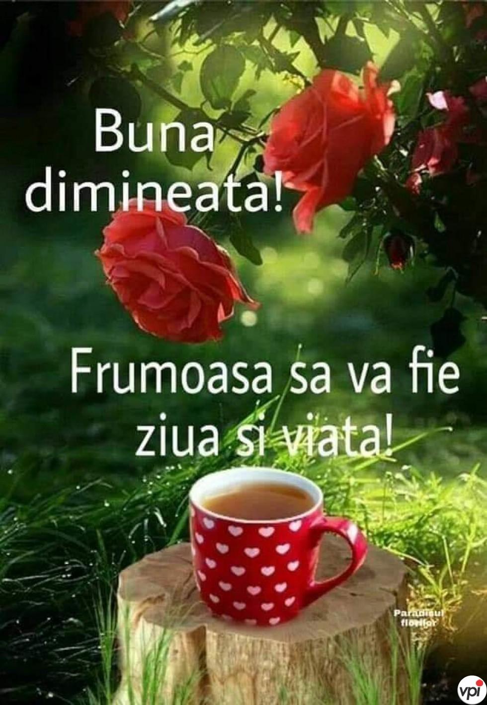 Bună dimineața! O zi frumoasă!