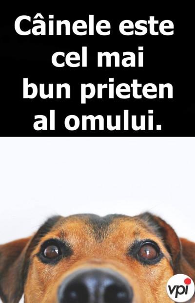 Câinele este cel mai bun prieten al omului