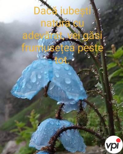 Dacă iubești natura cu adevărat