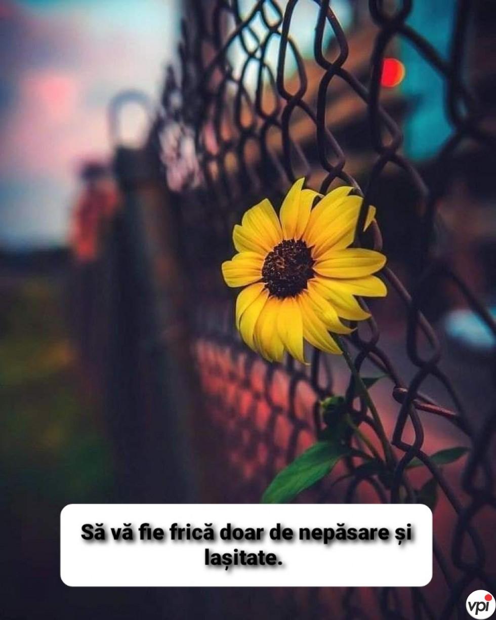 Să vă fie frică doar de nepăsare și lașitate