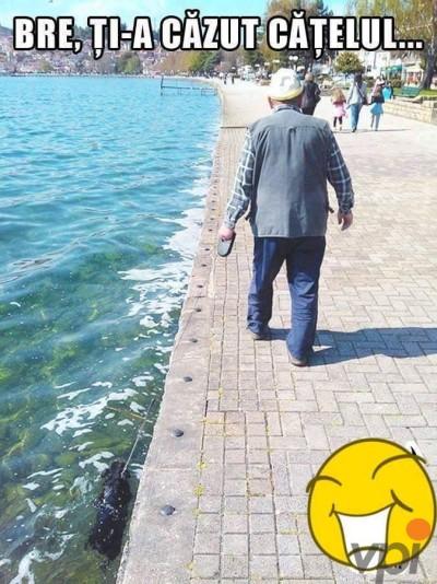 Cu catelul la plimbare