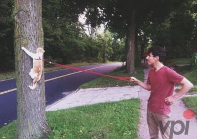 Cu pisica la plimbare