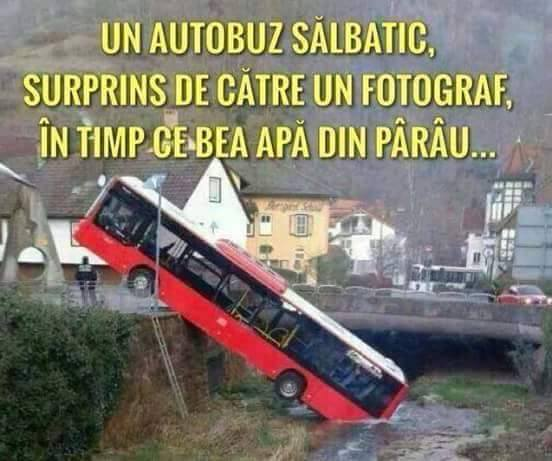 un autobuz salbatic